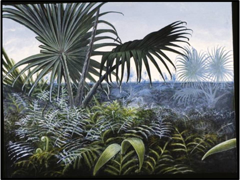 Reconstruction of Cretaceous Palmetto thicket vegetation at Big Cedar Ridge