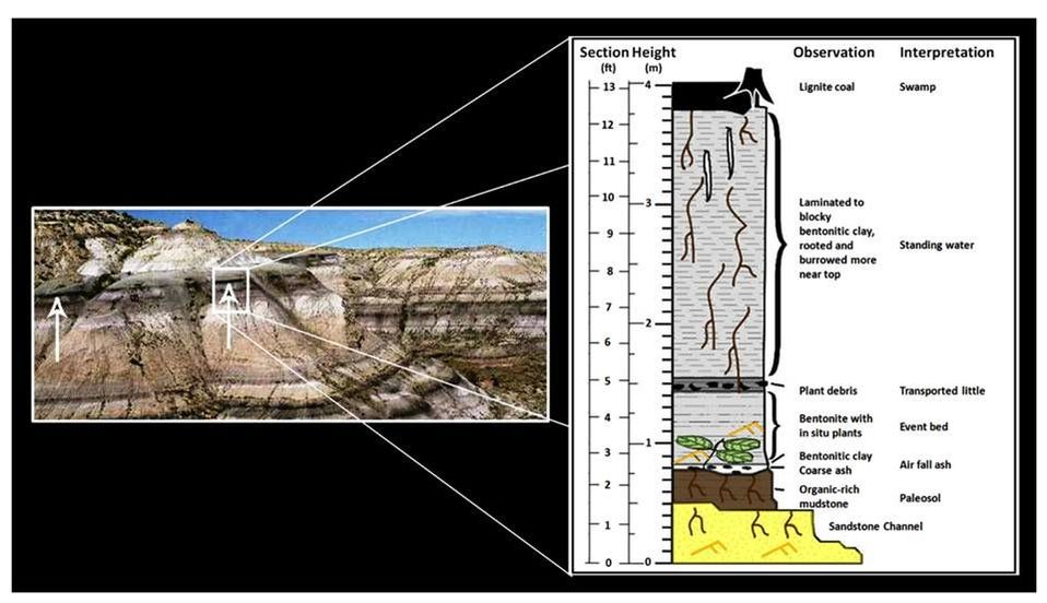 Picture Big Cedar Ridge Meeteetse outcrop and stratigraphic column