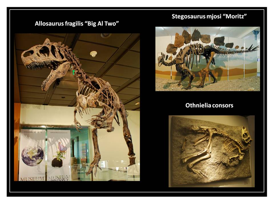 Pictures of dinosaurs fron Siber Quarry