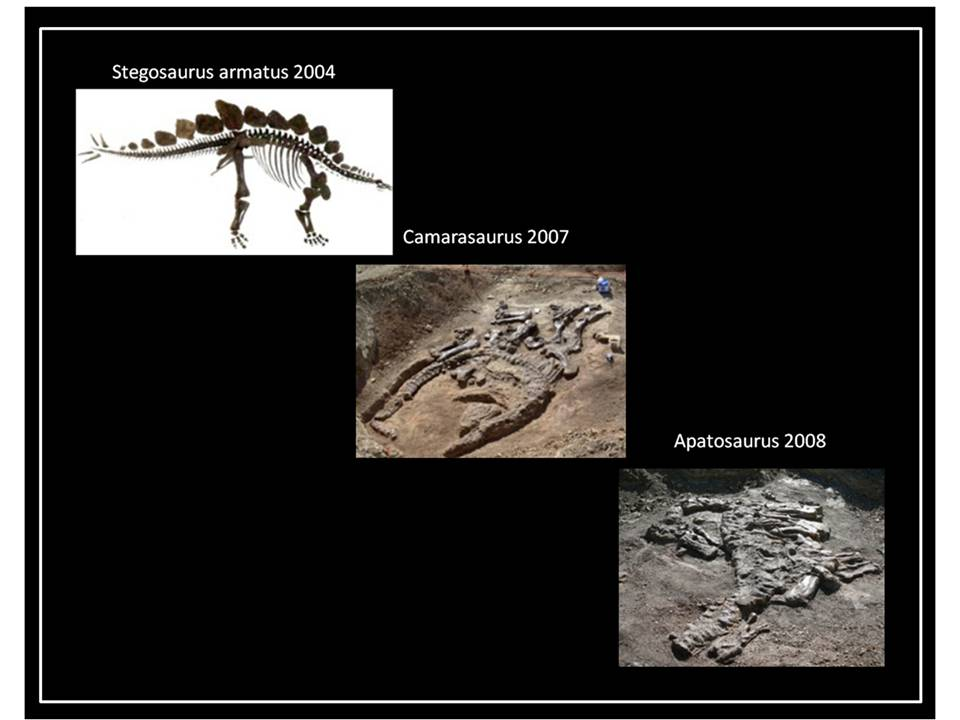 Pictures of dinosaurs from Red Canyon Ranch Quarry
