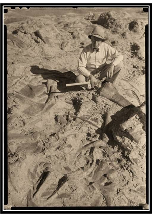 Picture of Barnum Brown at Howe Dinosaur Quarry, 1934, Big Horn County, Wyoming