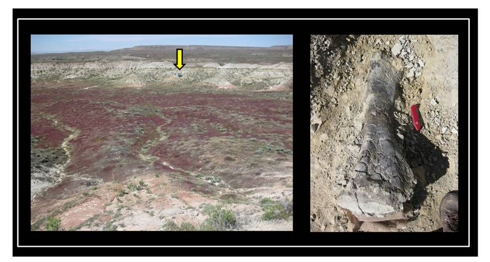 Picture of Two Sisters dinosaur quarry & dinosaur tibia bone, Morrison Formation, Big Horn County, Wyoming