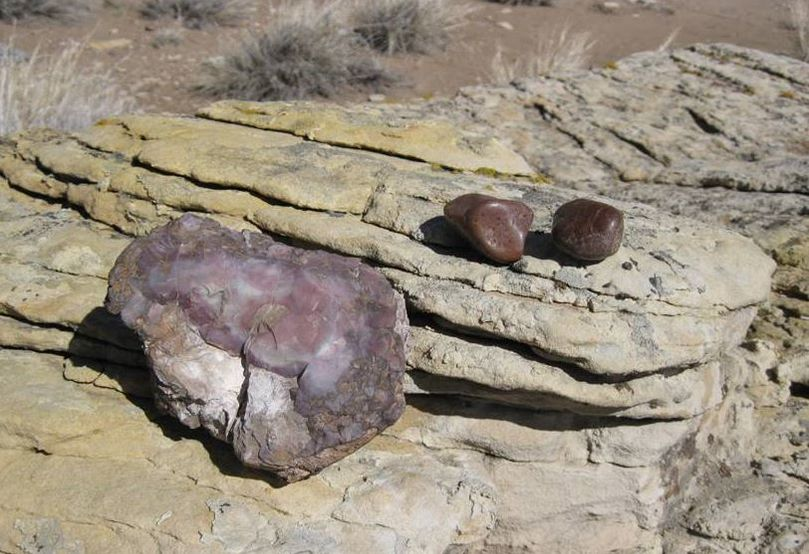 Picture Devil's Kitchen chalcedony and dinosaur gastroliths, Big Horn County, Wyoming
