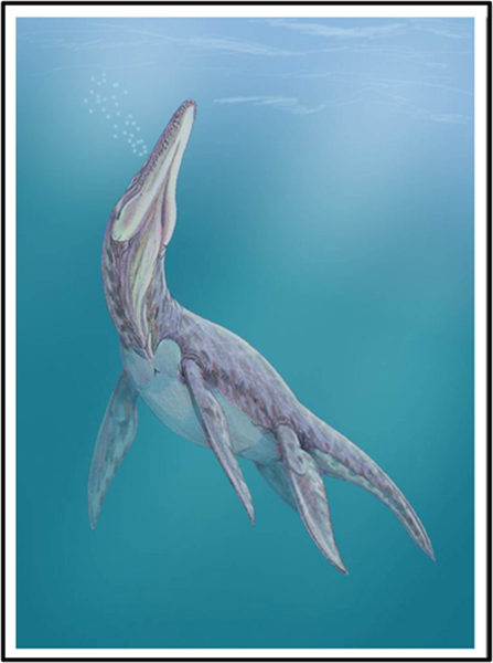 Reconstruction drawing of the Pliosaur Megalnesaurus rex