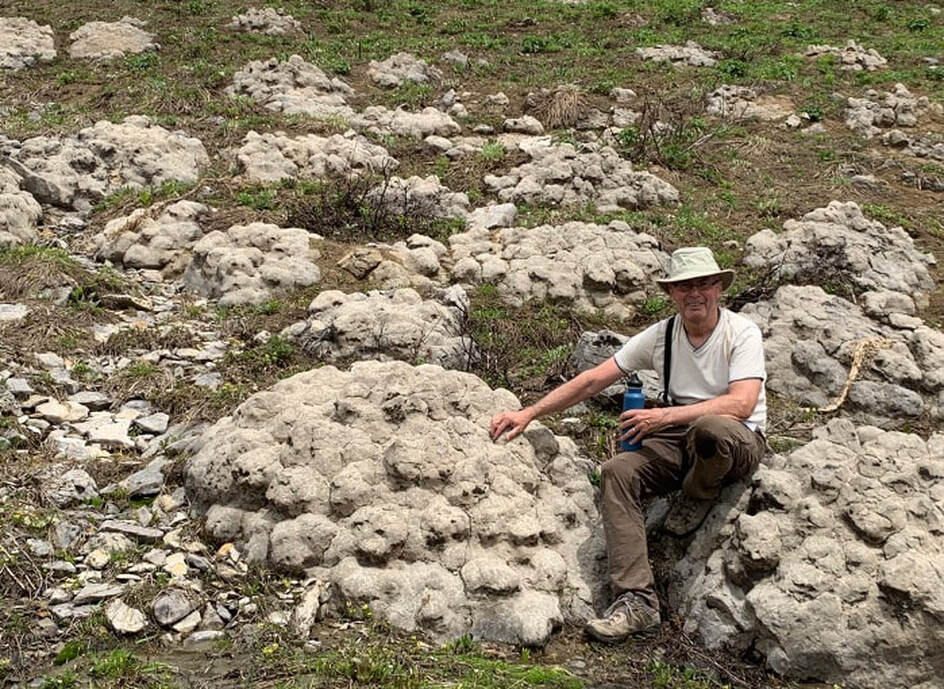 Picture of Cambrian stromatolites on west side of Tetons, Green Mountain Trail, Wyoming