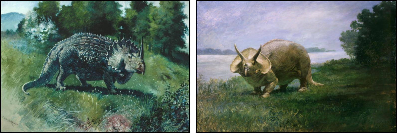 Charles Knight's historic illustrations of Triceratops
