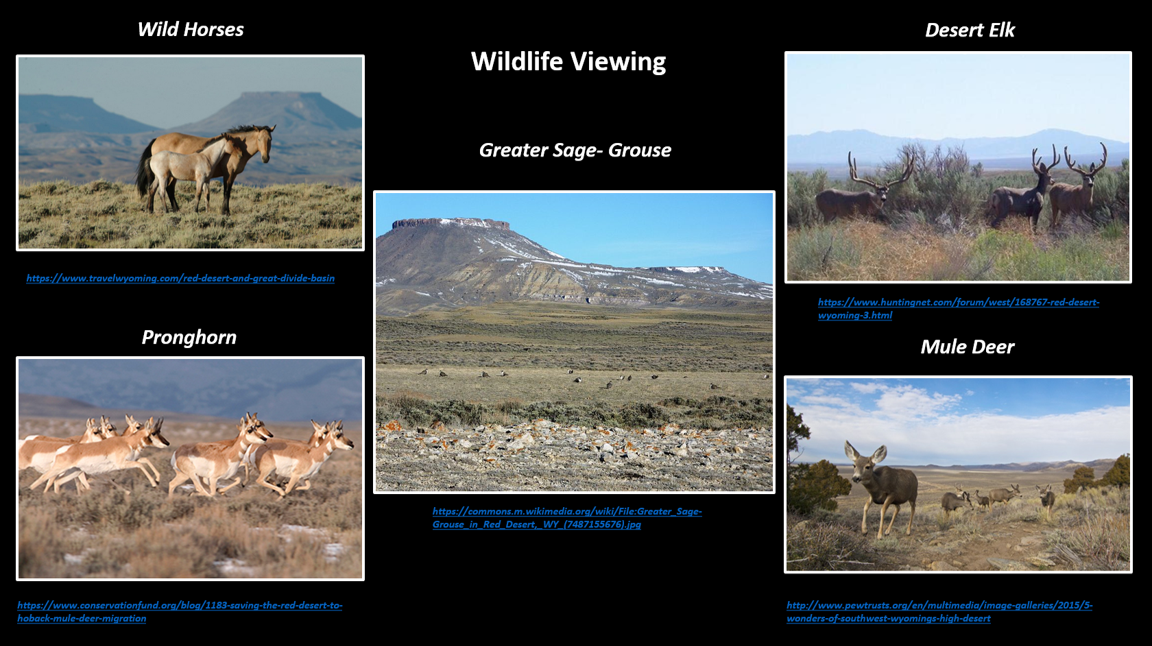 Pictures of wildlife in Red Desert, Wyoming